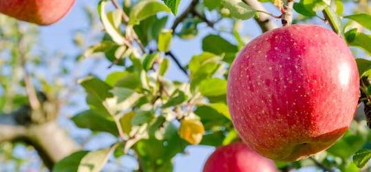 Appel - pensioen in eigen beheer